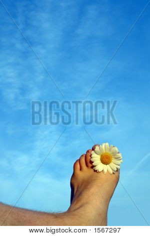 Sommer toes