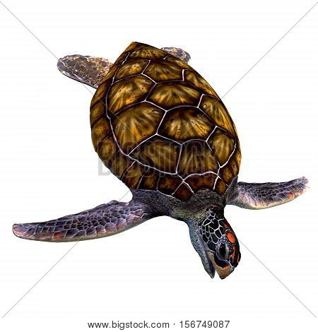 Green Sea Turtle on White 3D Illustration - The Green Sea Turtle is found in tropical and subtropical oceans and have an omnivorous diet.