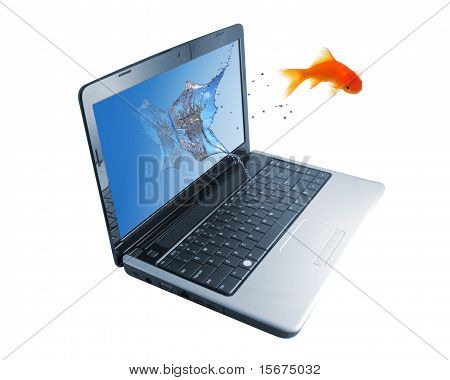 Goldfish Jump Out of Monitor