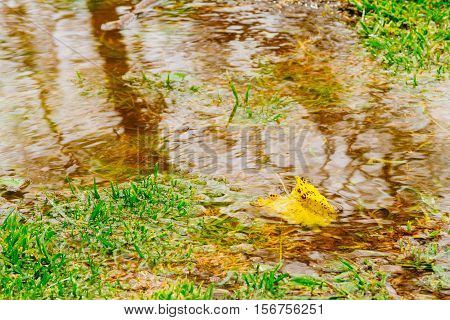 Yellow leaf floating in a puddle of water with reflection and green grass