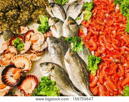 Venetian fish market - dorados and prawns. The Rialto fish market is located alongside the Grand Canal near the Rialto Bridge - Venice Italy