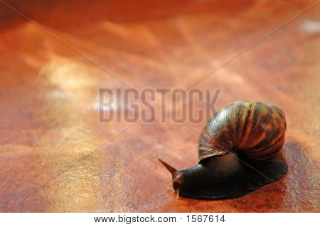 Snail Over Orange Tile