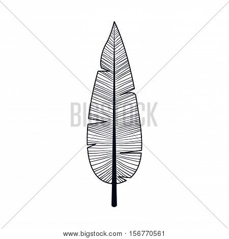 Feather plume icon. Bohemic boho rustic decoration nature and vintage theme. Isolated design. Vector illustration