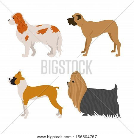 Set of purebred dogs. Terrier yorkshire and pretty hound. Vector illustration