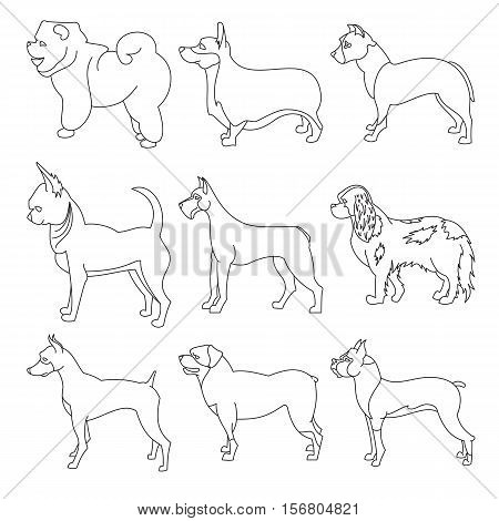 Set of purebred dogs in linear style. Boxer and chihuahua, corgi and doberman, vector illustration