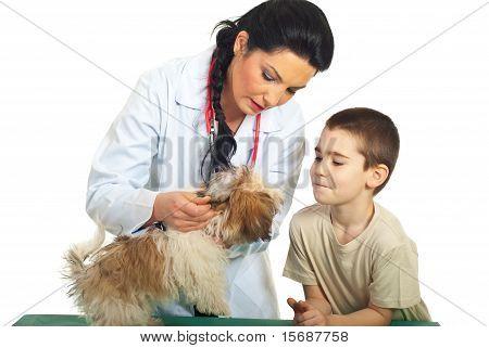Doctor Vet  Checking Puppy Ears