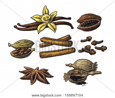 Set of spices. Anise star cardamom clove cinnamon stick fruits of cocoa beans vanilla stick and flower poppy heads and seeds. Isolated on white background. Vector color vintage engraving illustration.