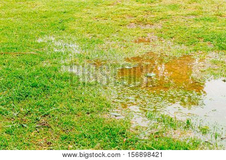 Puddle Of Water With Reflection And Green Grass