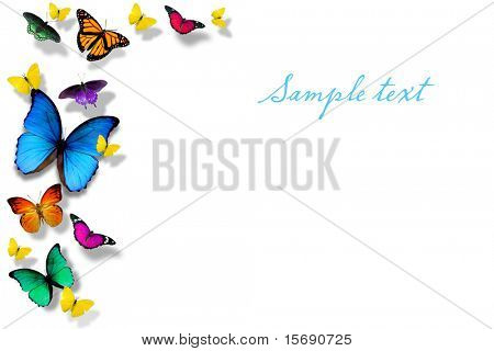 Colorful butterflies isolated on white, room for copy