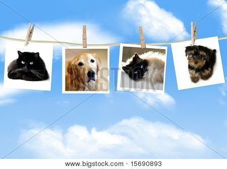 Photos of dogs and cats hanging from a clothes line
