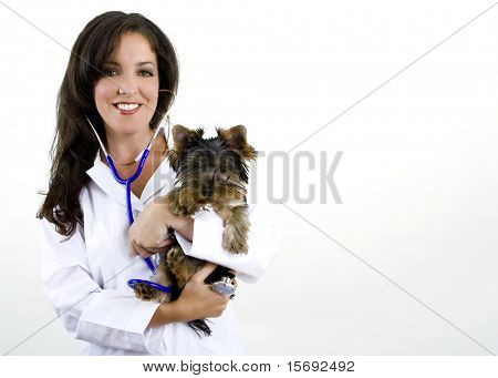 A veterinarian holding a Yorkshire Terrier