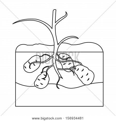 Potato icon in outline style isolated on white background. Plant symbol vector illustration.