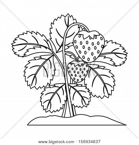 Strawberry icon in outline style isolated on white background. Plant symbol vector illustration.