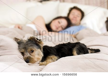 Happy couple laying in bed with their dog - focus on dog