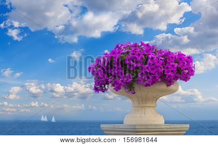 Vase of pink petunia flowers over the beautiful seascape of Odessa Ukraine