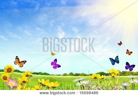 Flowery field with grass and butterflies