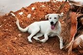 stock photo of stray dog  - white Greek stray dog laying near a palm tree - JPG