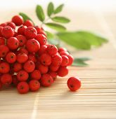 image of rowan berry  - Red rowan - JPG