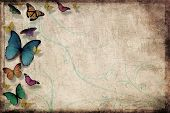 Colorful butterflies isolated on grunge background, room for copy