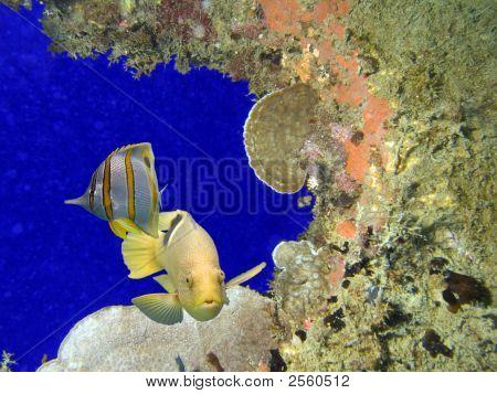 Coralholefish