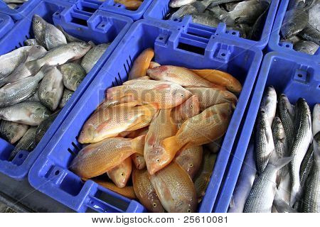 boxes of different spices of fishes