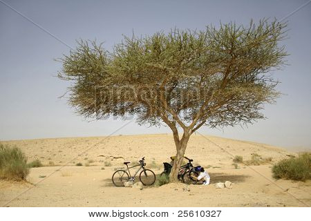 cyclists under tree,  in sede boker desert, israel