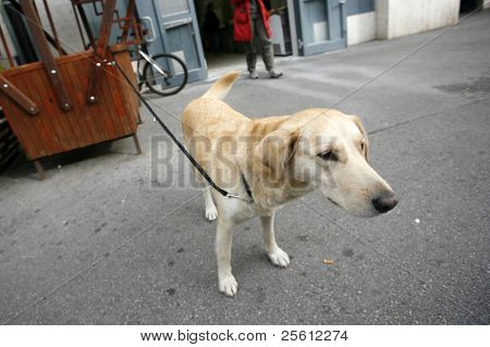 Lonely dog attached waiting for its master to come back from shopping