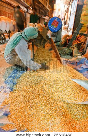 DELHI - JAN 19: Man pouring corn from a sack onto the floor on 19 January, 2008 in Delhi, India.  India's grain output may drop after the weakest monsoon in more than 3 decades.