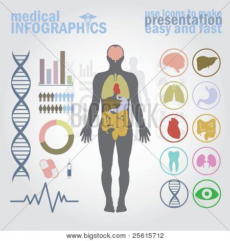 Infográficos médicos. Jogo de apresentação. Corpo humano com órgãos internos mais botões. Diagrama (gráfico