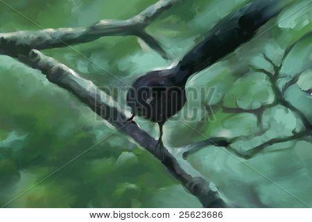 Singing nightingale in Indian mango grove