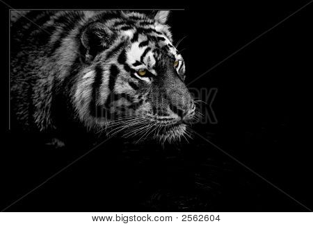 Tiger Hunting