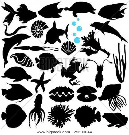 A Vector Silhouette of Fish, Sealife, (Marine life, seafood) isolated on white