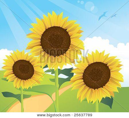 Summer Sunflower Landscape