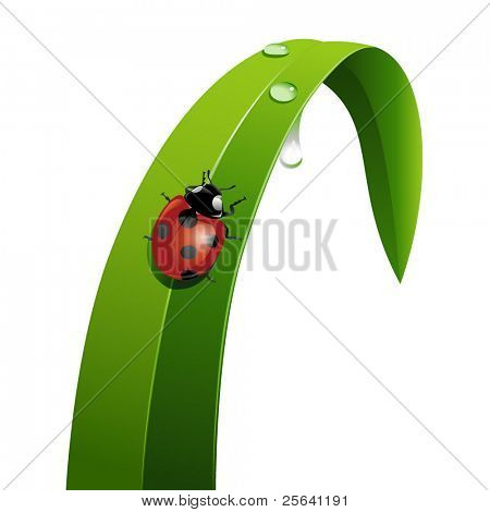 Ladybug on a leaf of grass with dewdrops
