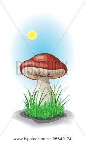 Mushroom. Vector illustration