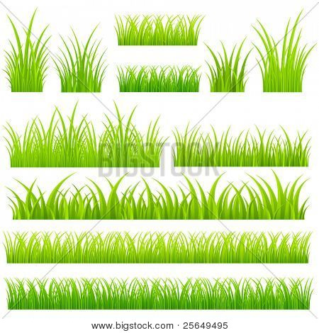 Set of vector grass. Tufts of grass.