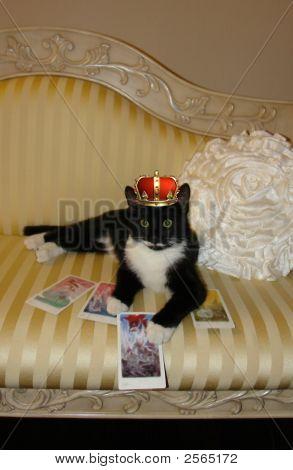 Tarot Tuxedo Cat