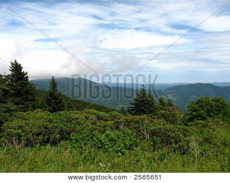 Roan Mountain In Summer
