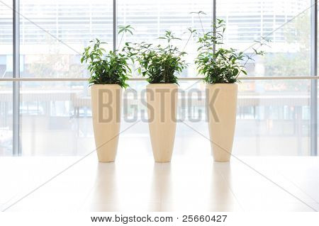 Green plants in vase