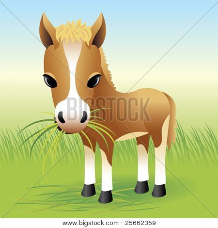 Baby Animal collection: Horse