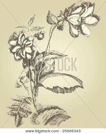hand drawn dahlia