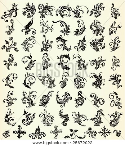 Ornament flourishes, vector floral herb collection