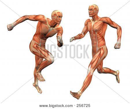 Muscle Man W / máscara de recorte