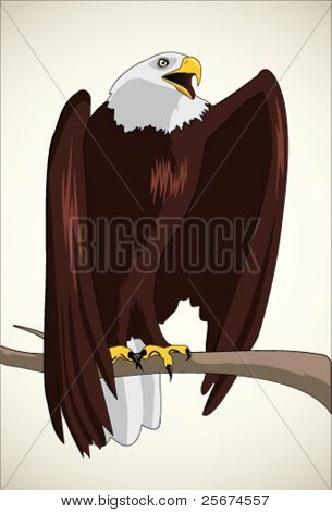 Illustration of bald eagle