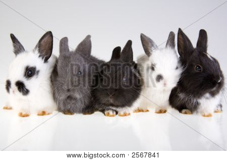 Five Rabbit On The Grey Background