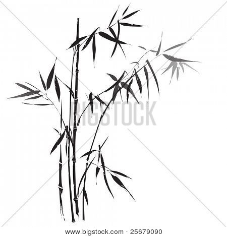 Bamboo branches