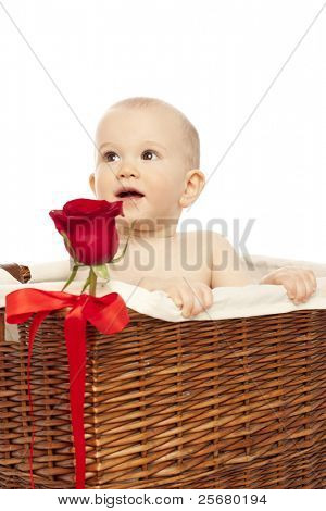 Little boy in basket with red  rose