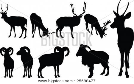 Animals with horns