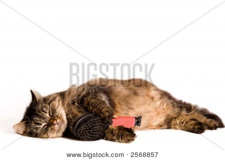 Cat Is Sleeping With A Brush