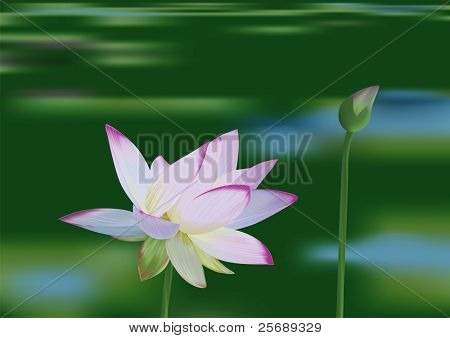 Beautiful water lily on the lake background - vector illustration